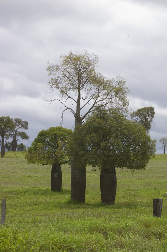 Bottle Trees near Downfall Creek