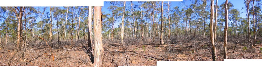 Post-fuel-reduction burn forest, St Arnaud,