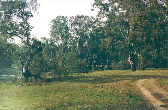 Murray River Reserves - Shaws Flat