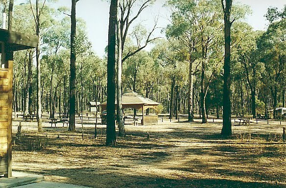 Killawarra State Forest: Forest Camp