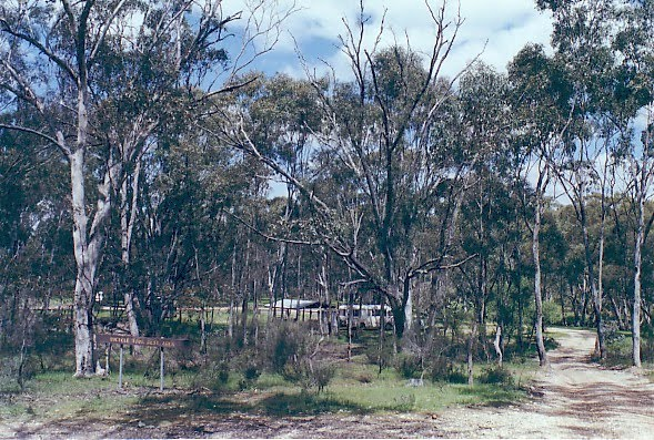 Loddon State Forest: Waanyarra camp ground