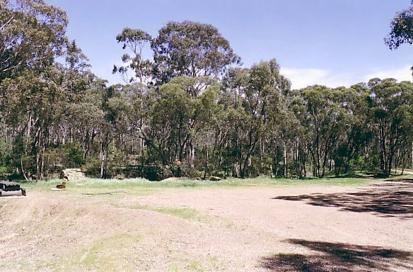 Marong State Forest: Bullock Picnic Ground