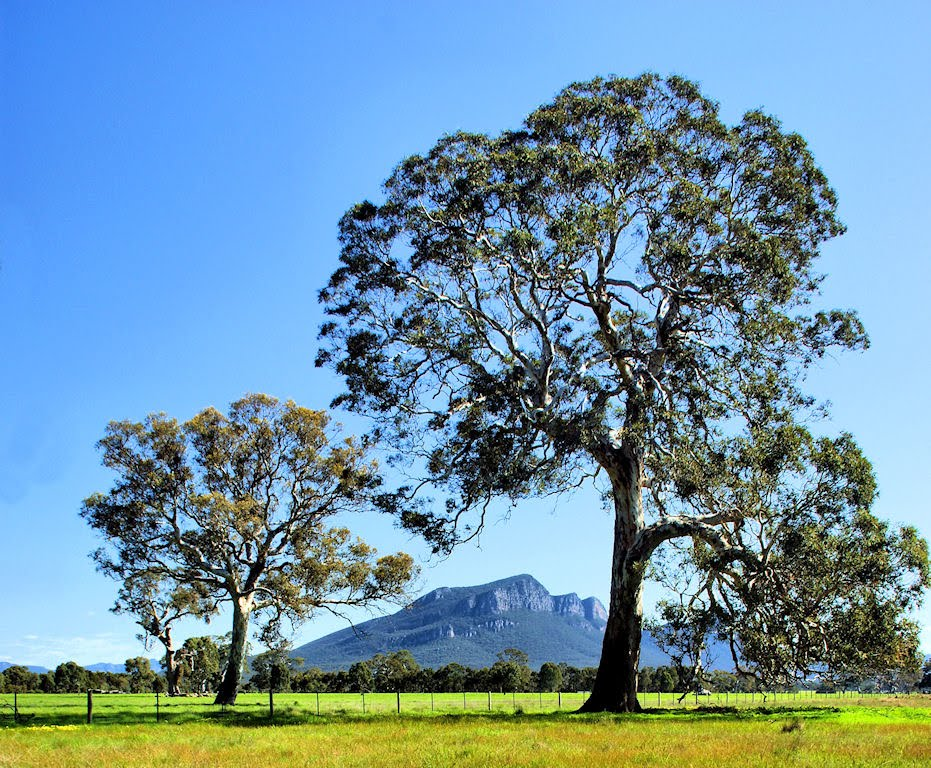 Mt.Abrupt. from Dunkeld.