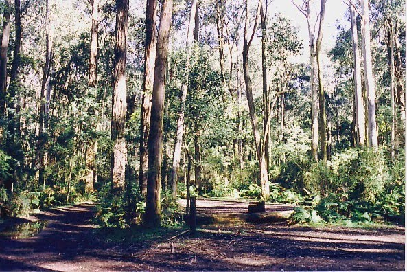 Kinglake National Park; The Gums camp ground