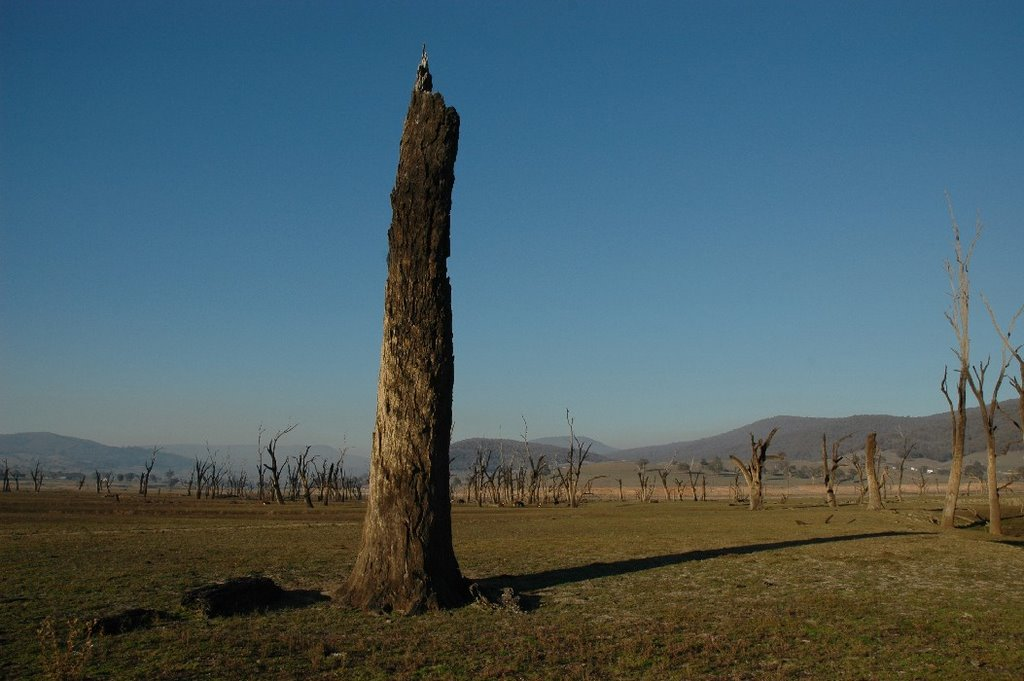 Lake Hume Stump