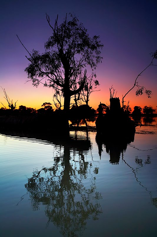 Murray River Billabong Sunset
