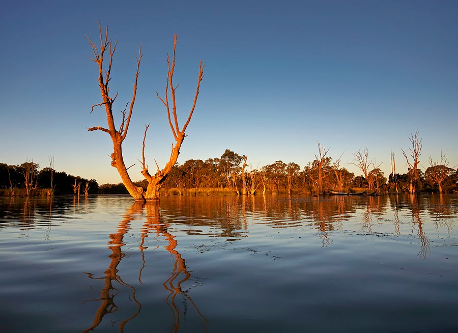 Murray River Billabong