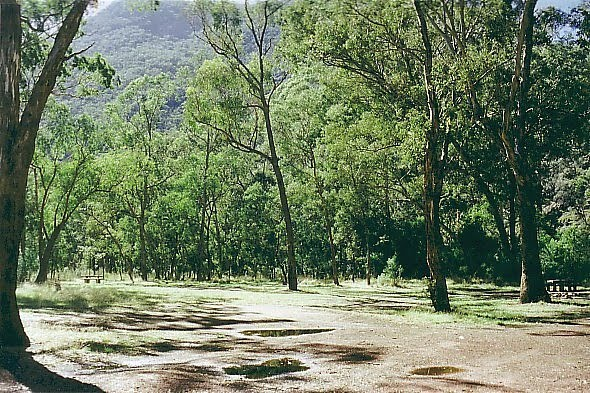 Alpine National Park: Mutton Wood Camp Ground