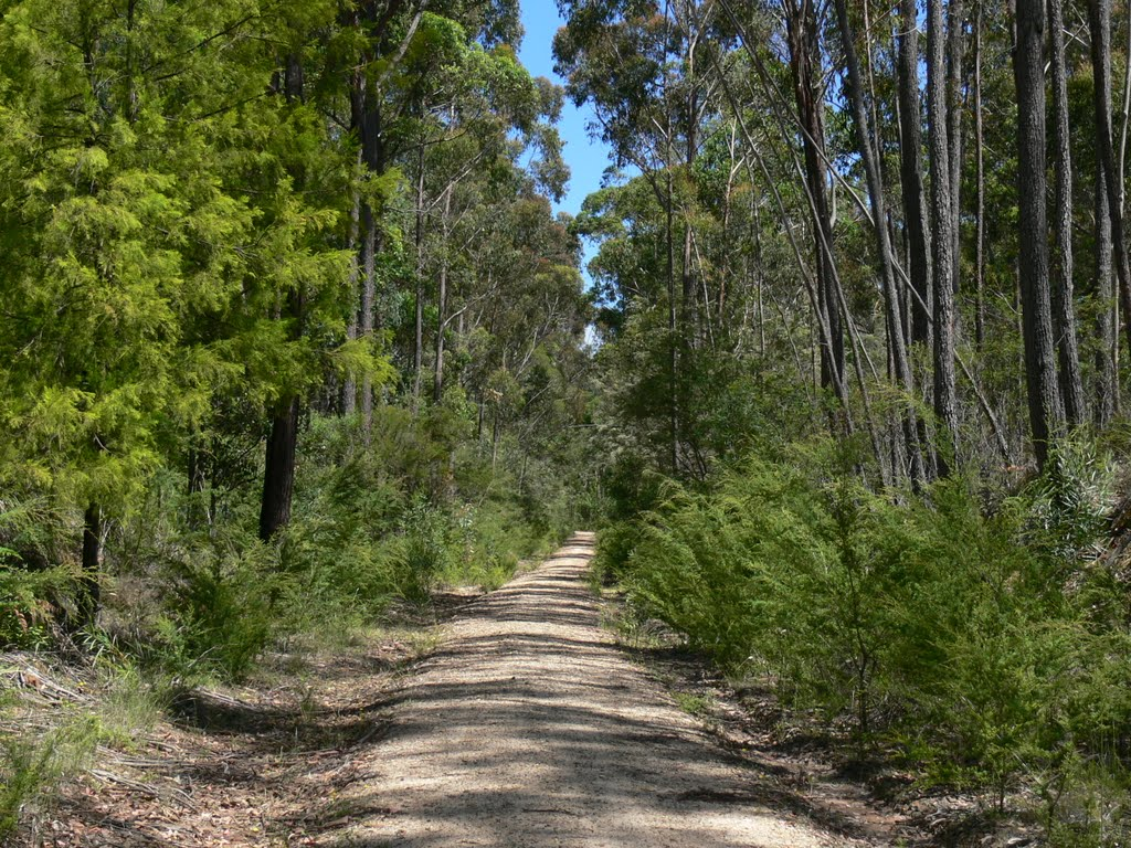 Railtrail not far from Orbost