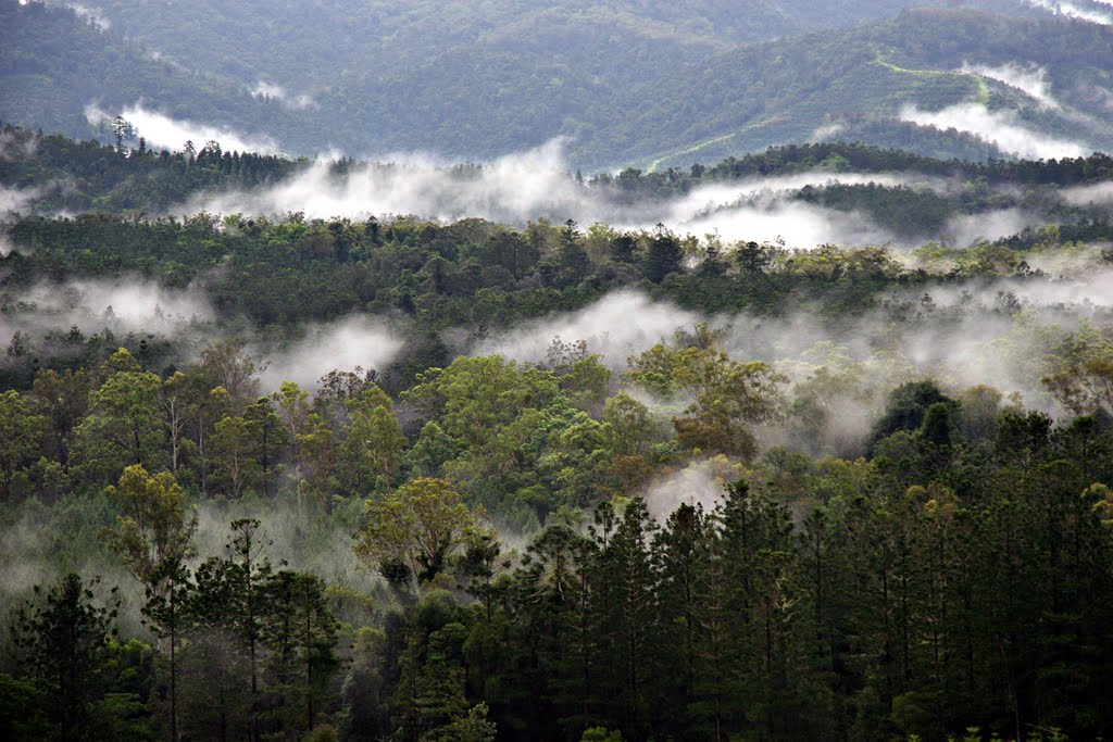 A Wet Summer at Imbil: warm mists caress the Imbil forests