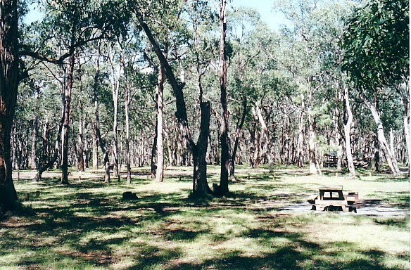 Mt Clay State Forest, Sawpit Camp Ground