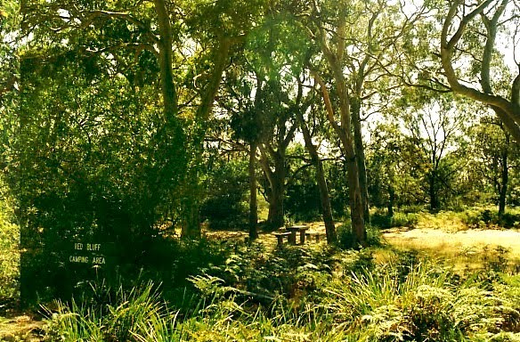 Gippsland Lakes Coastal Park: Red Bluff Camp ground