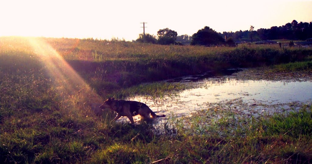 Orange sun ray on swimming dog in Orange
