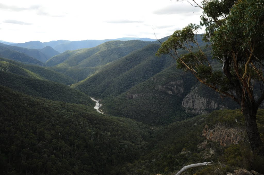Tulloch Ard Snowy River from Lookout