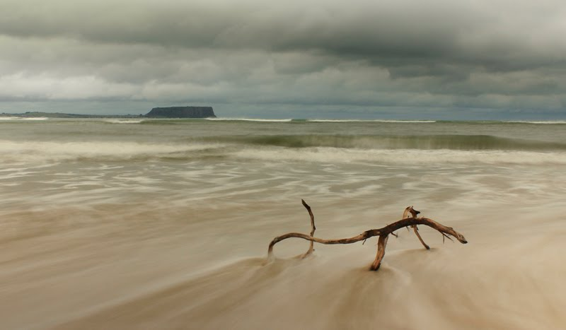 Driftwood by David Gibbs