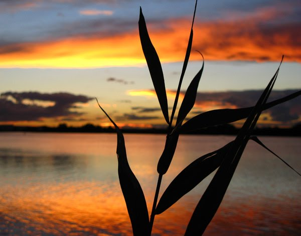 sunset reeds by David Gibbs
