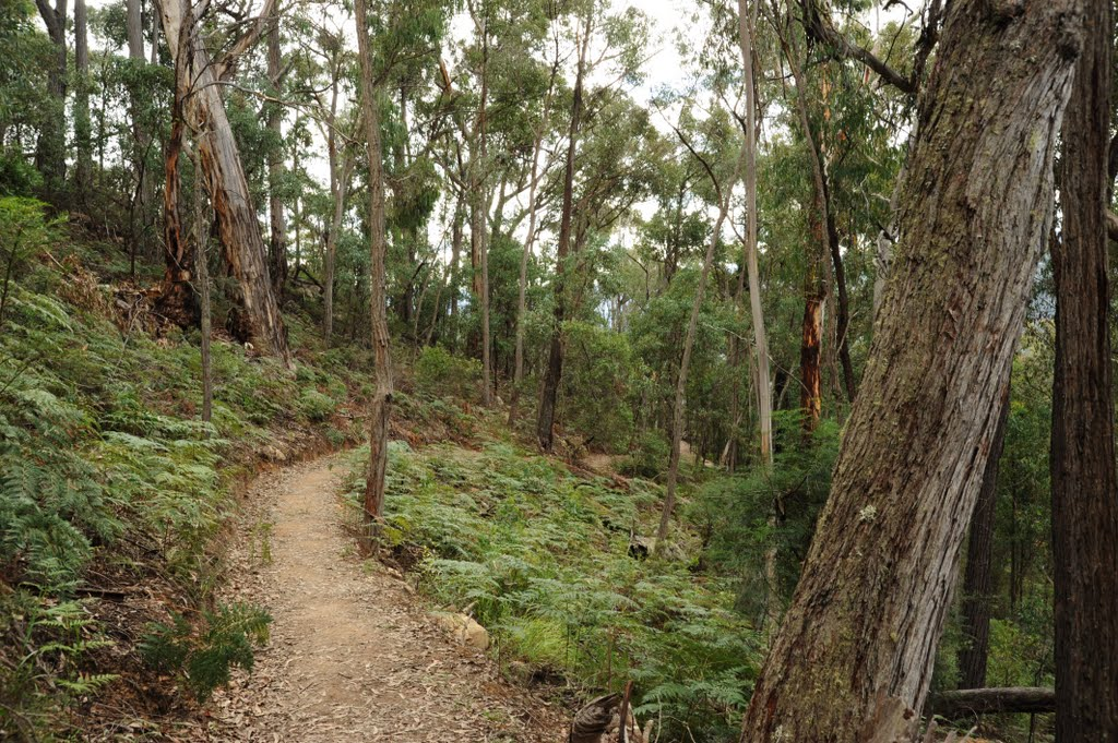 Walking Track to Tulloch Ard lookout