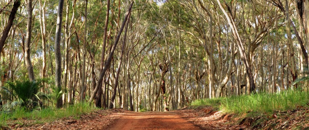 Spotted Gum Forrest
