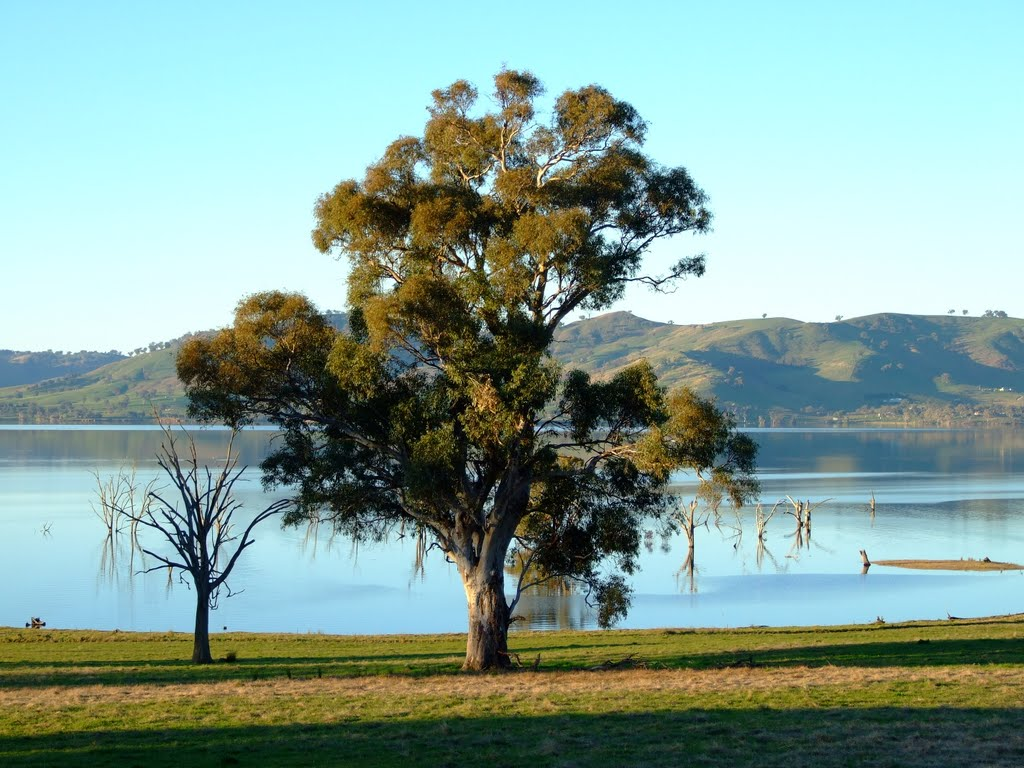 'River Red Gum' Lake Hume, Victoria.