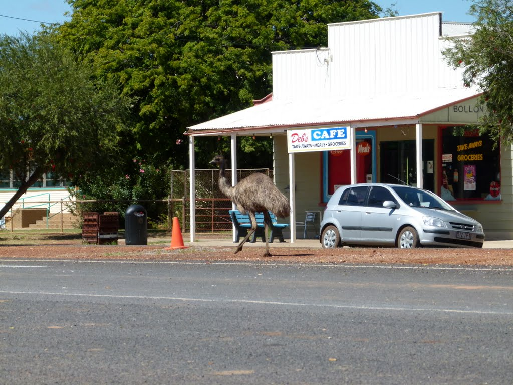 More Emus in Bollon