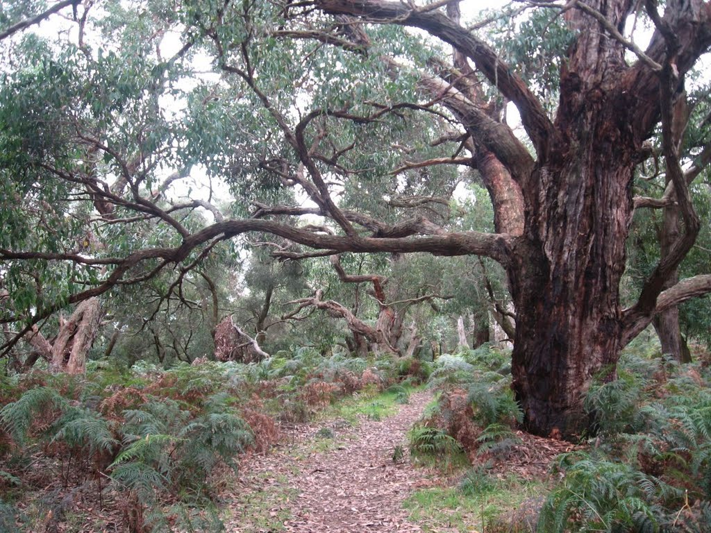 Spooky forest @ Bald Hills