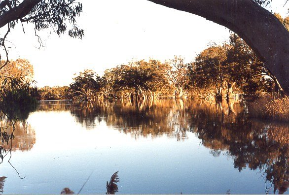The Murray River at Wentworth Circa 1986