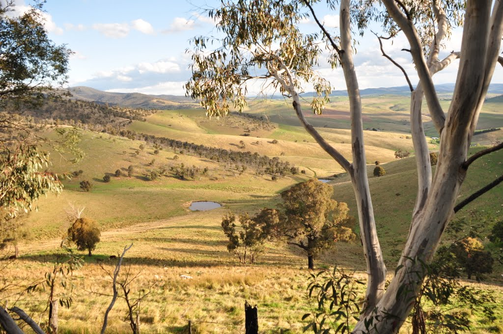 Sweet afternoon light in the Omeo Valley