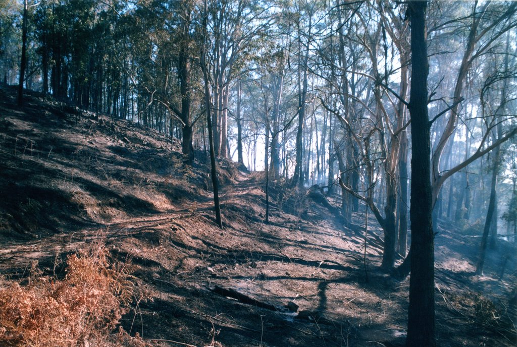 Farm road - after bushfire January 2002