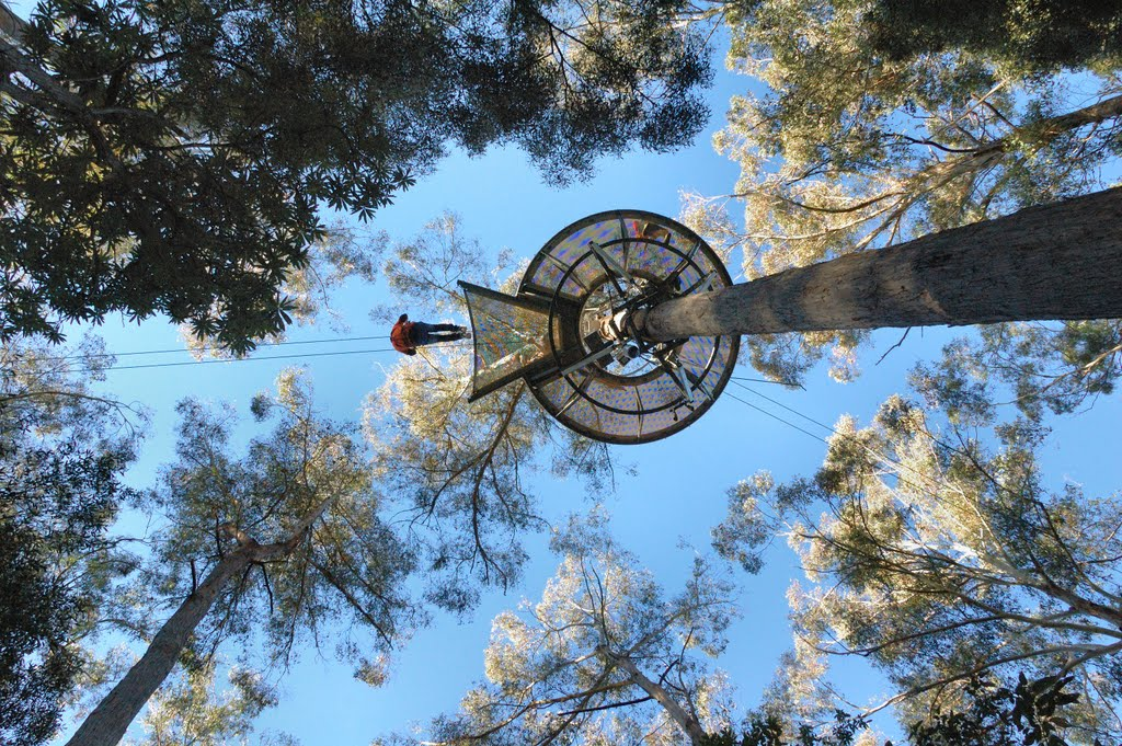 Landing in tree, Hollybank Treetops Adventure