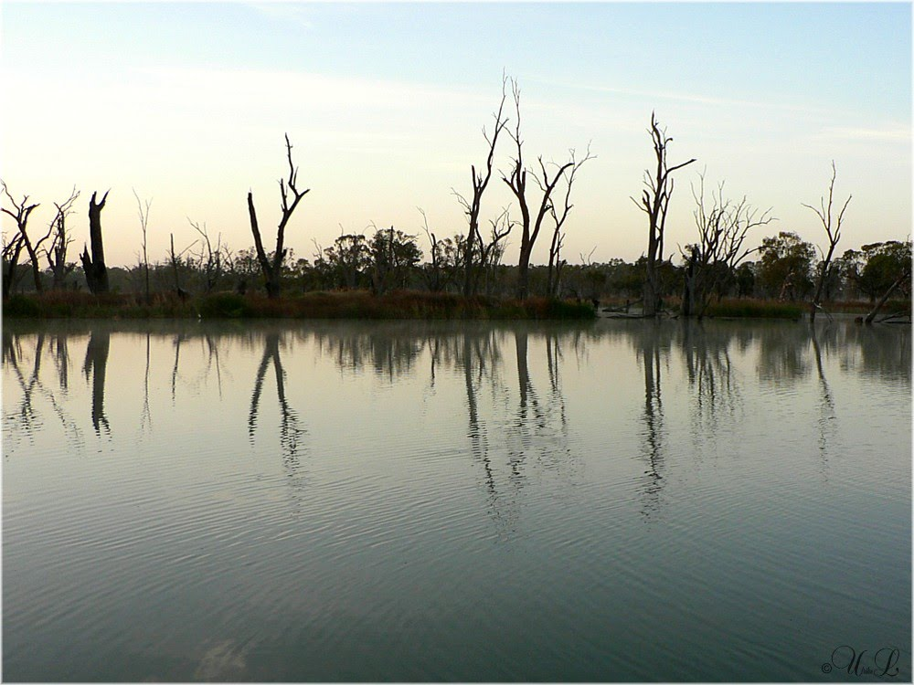 Swamps at Loch Luna in ther Riverland of South Australia