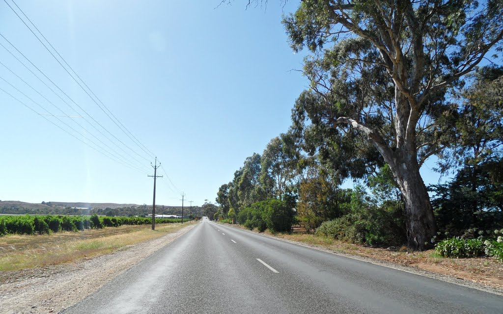 View looking up Penrice Road in the Barossa Valley, on 26-01-2012