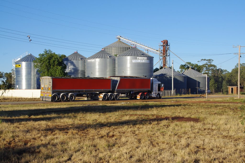 Rush hour at the Barellan Silos