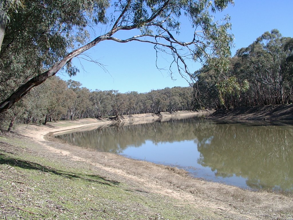 Red Gums on Murray River near Vinifera