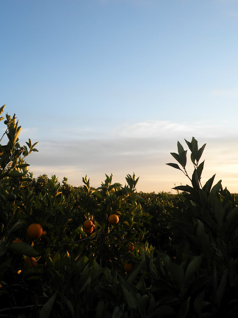 Sunset at the Orange Fields