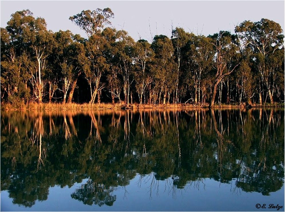 Murray River **Chowilla Park ** SA
