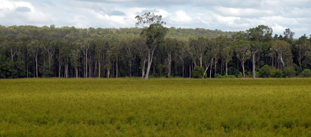Tea tree oil crop and swamp forest