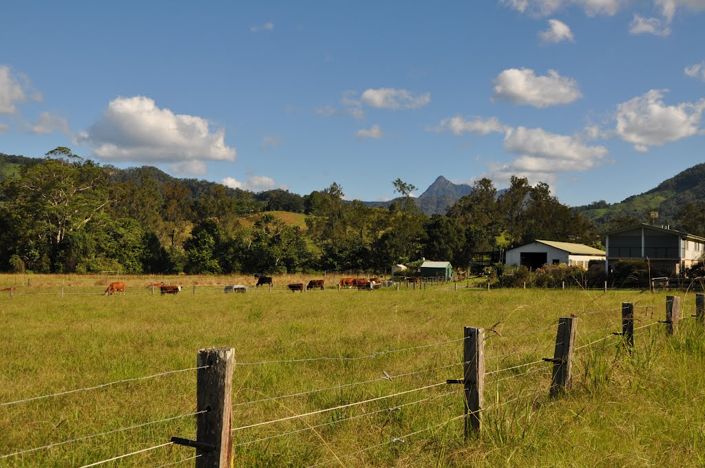 Farm with Mt Warning