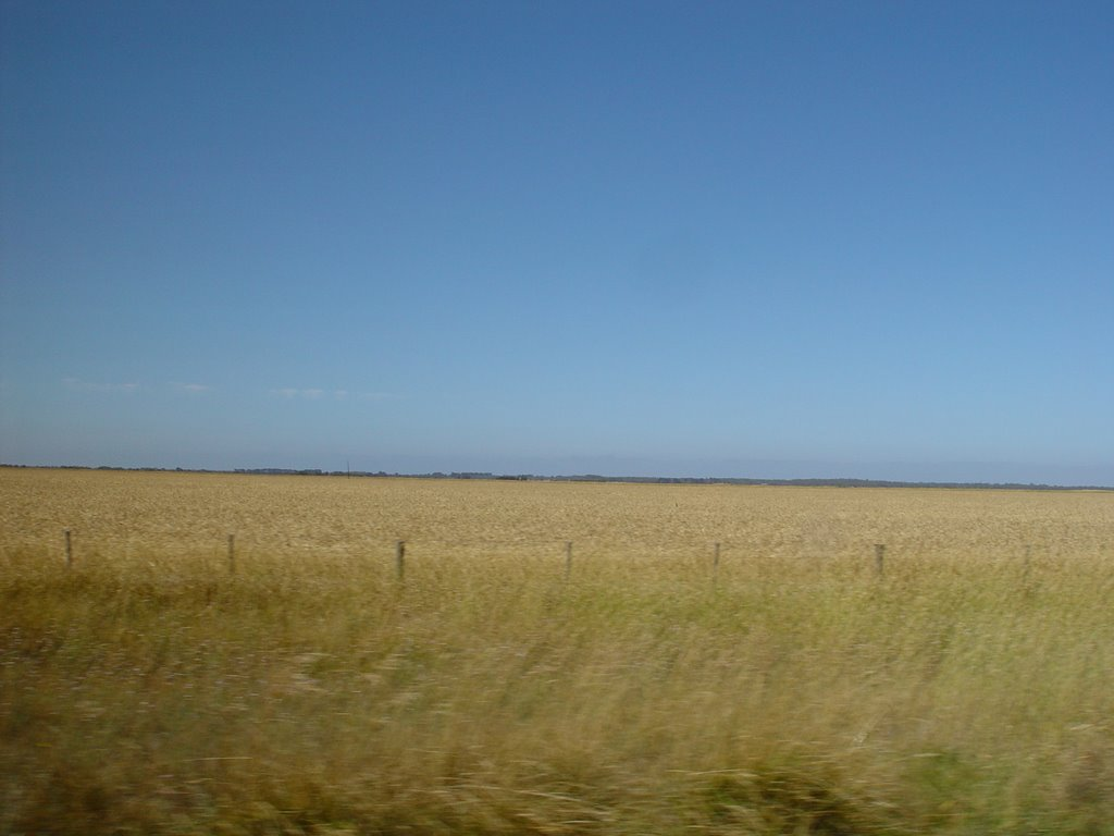 Wheat Fiels  Coonawarra