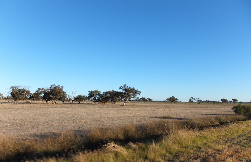 View into Paddocks along the Woods Well Road near TINTINARA, on 16-04-2012