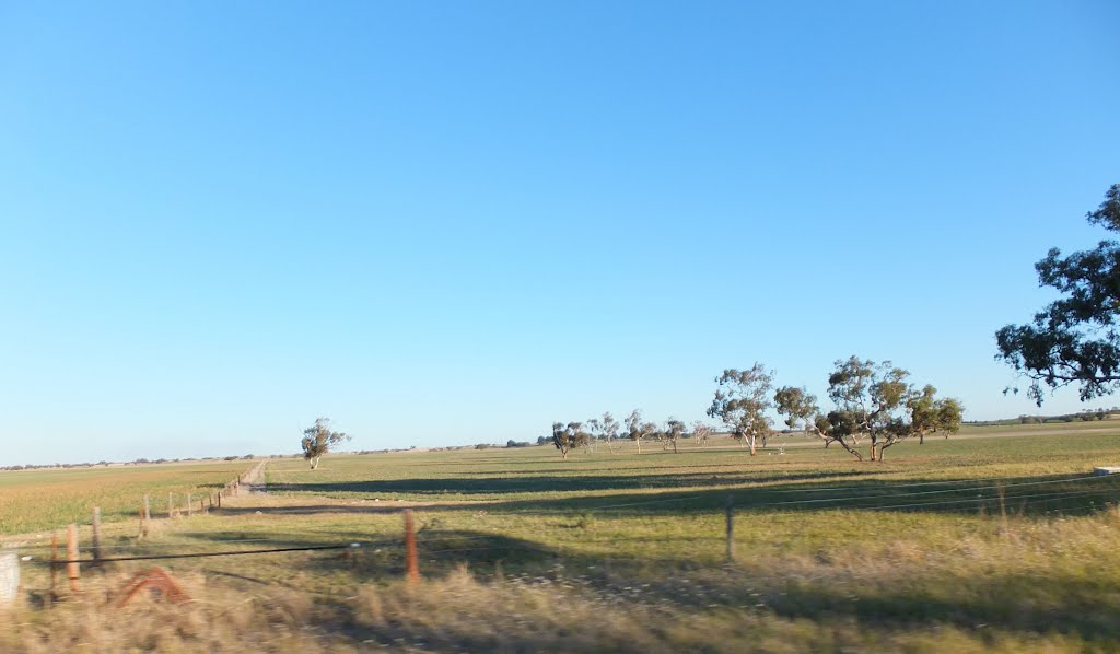 View into Paddocks along the Woods Well Road, near TINTINARA, SA, on 16-04-2012