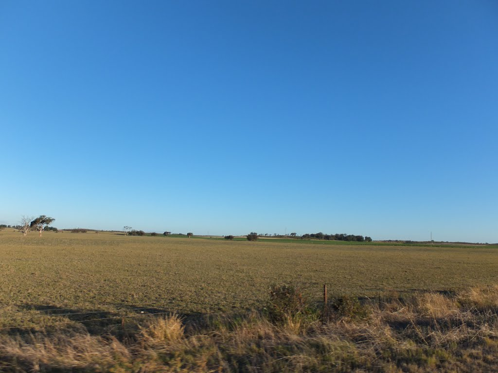 View across Paddocks along Woods Well Road near TINTINARA, SA, on 16-04-2012