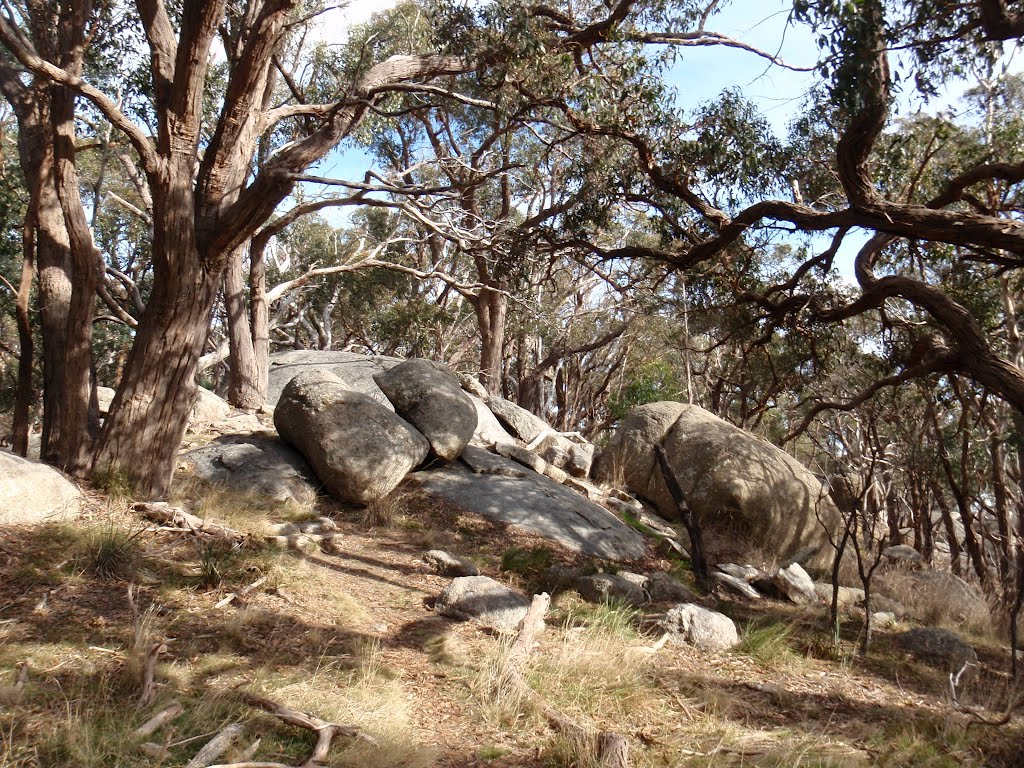 Granite Boulders along Ridge Walking Track