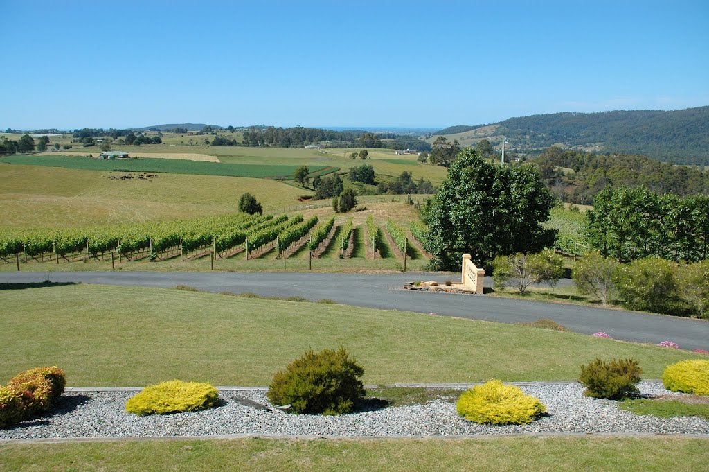 Barringwood Park vineyard