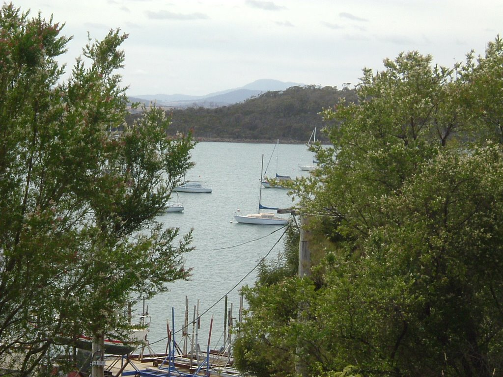 Looking out at the Yacht Club, Beauty Point