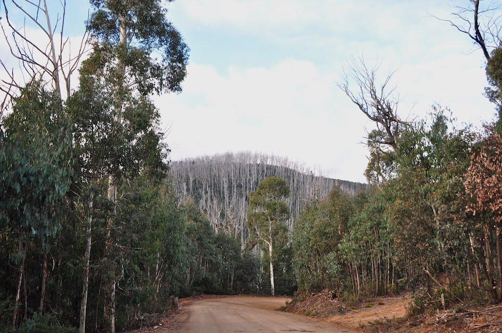 Benambra-Corryong Road - new growth and fires past