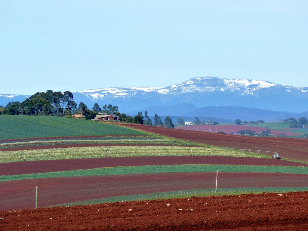 A zoom-in on Springtime, from lush growing vegies at Lillico Road to receding snowline on Black Bluff........381