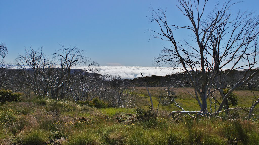 Looking above the clouds from the Howitt Plains