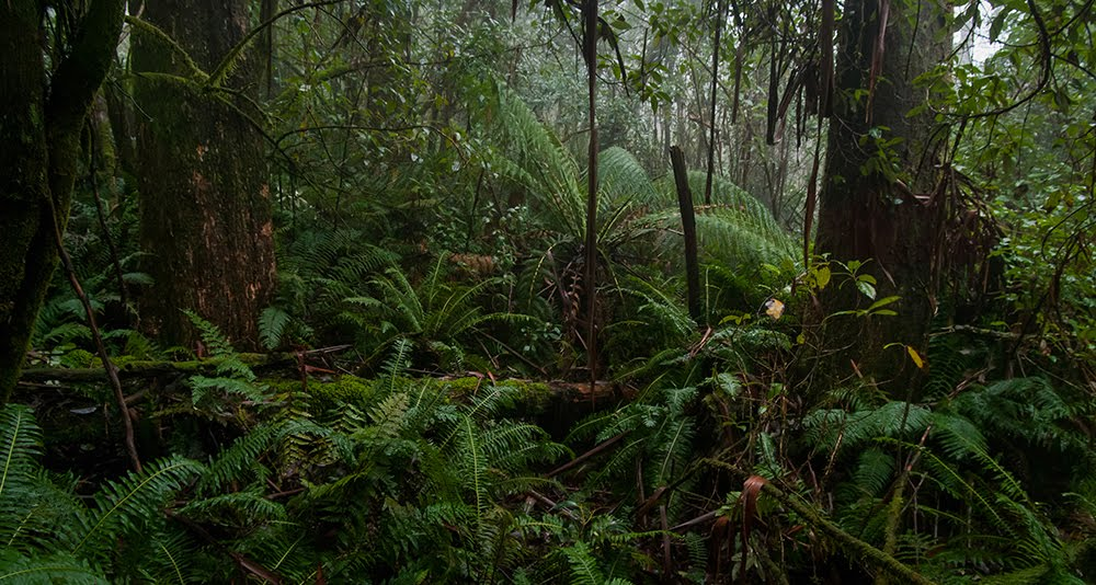 Mount Macedon Rainforest