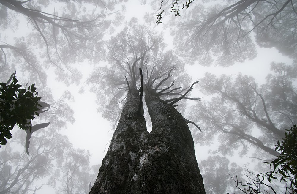 Mount Macedon Forest 3