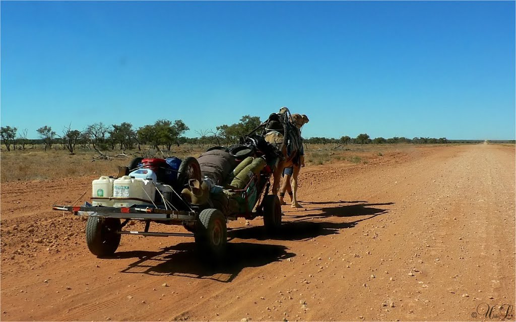 a man and his Camelcar traveled from Alice Springs to Boulia about 800 Km